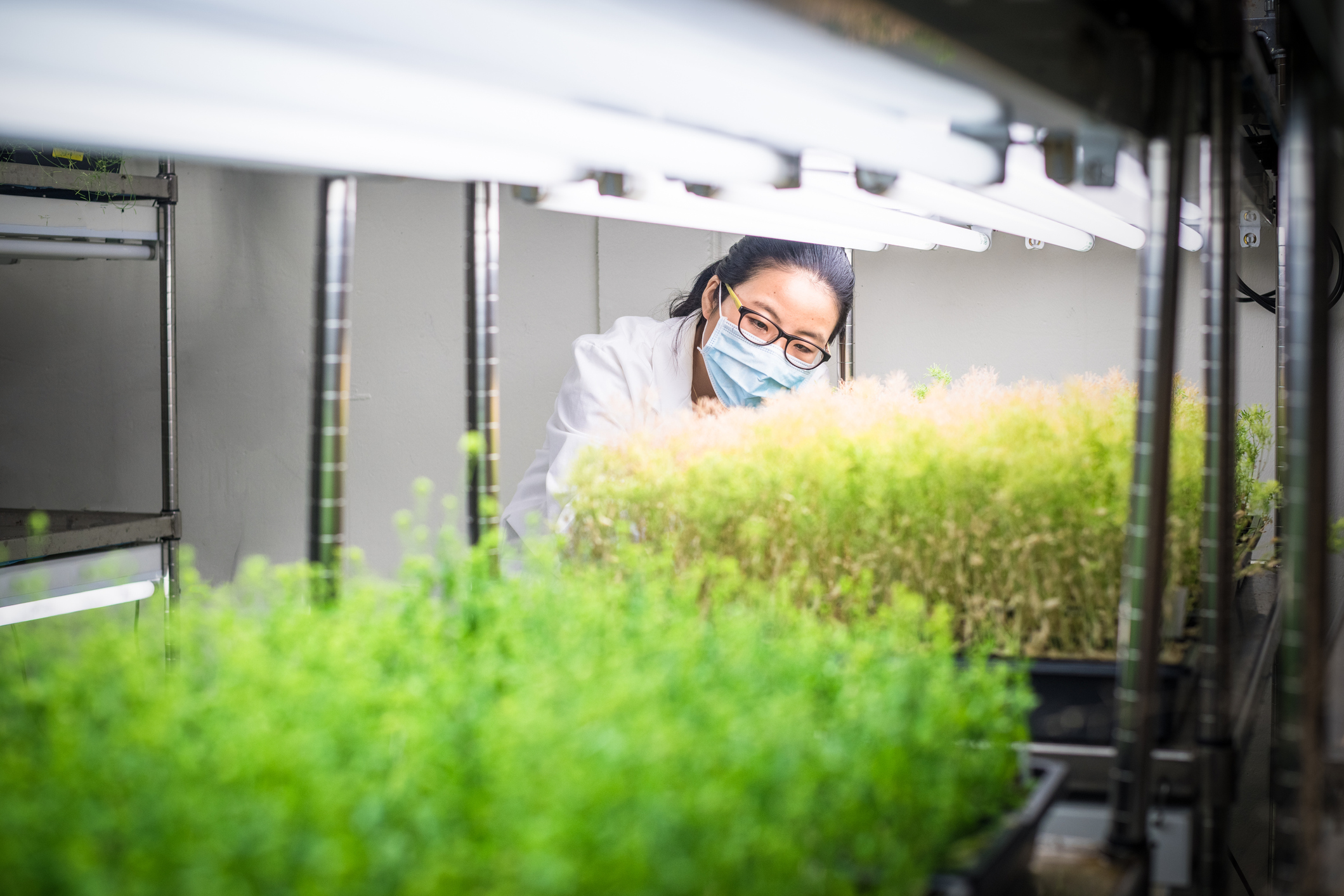 Harnessing the potential of state-of-the-art genomic technologies for accelerating the rate of genetic gain in wheat