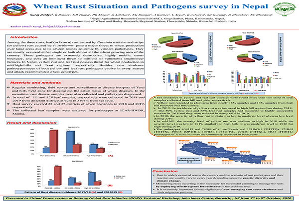 Wheat Rust situation and the pathogens survey in Nepal